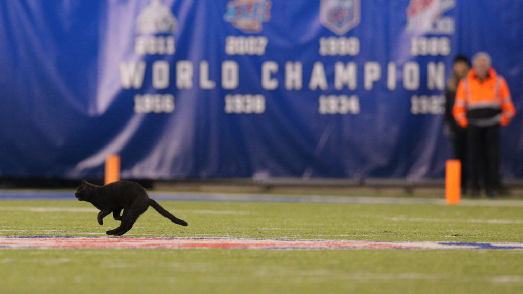 Black cat on Monday Night Football goes viral
